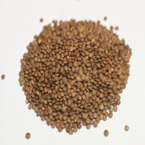 graines de lentillons type champagne Bio