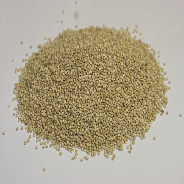 graines de quinoa complet Bio